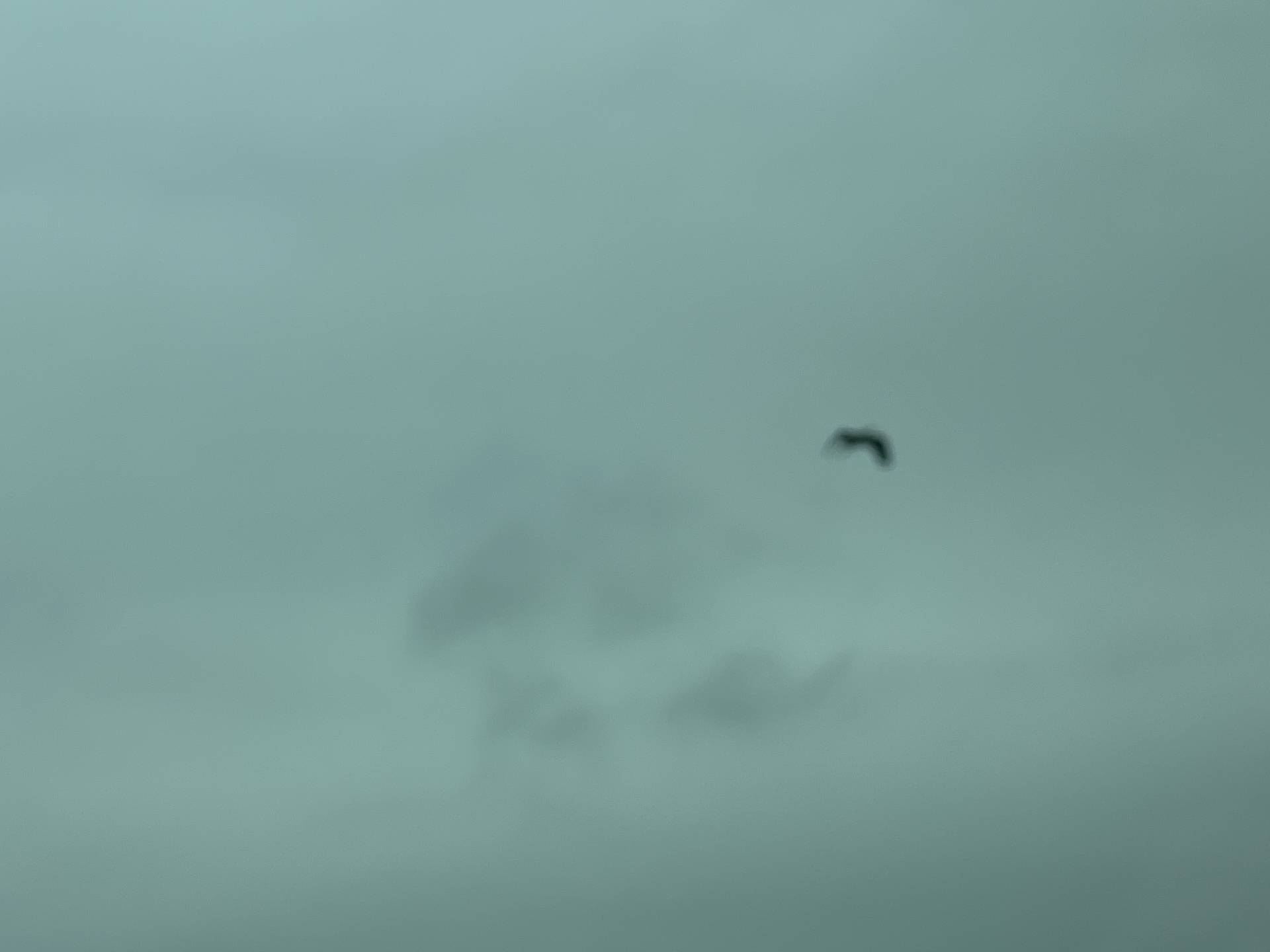 That was a great blue heron! #blurry